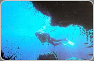 Red Sea Diving - Abu Galum - PADI Scuba Diving Centres in Sharm el Sheikh